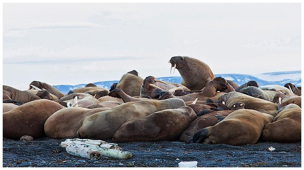 075-Spitzbergen-10