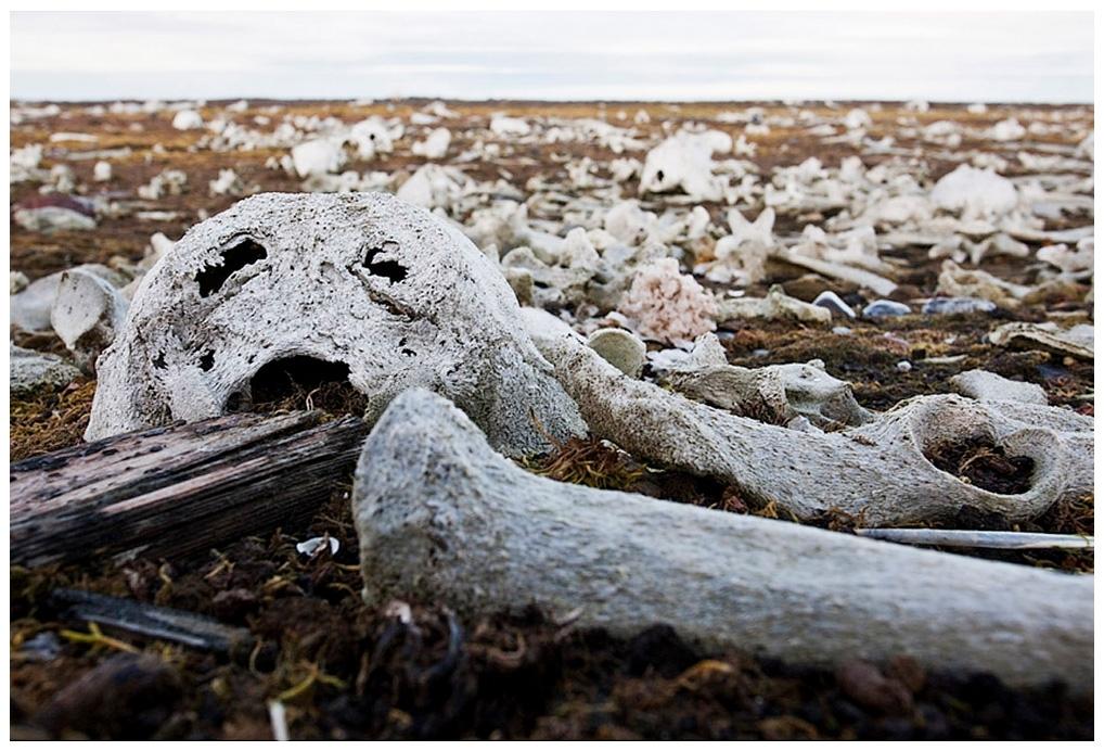 095-Spitzbergen-10