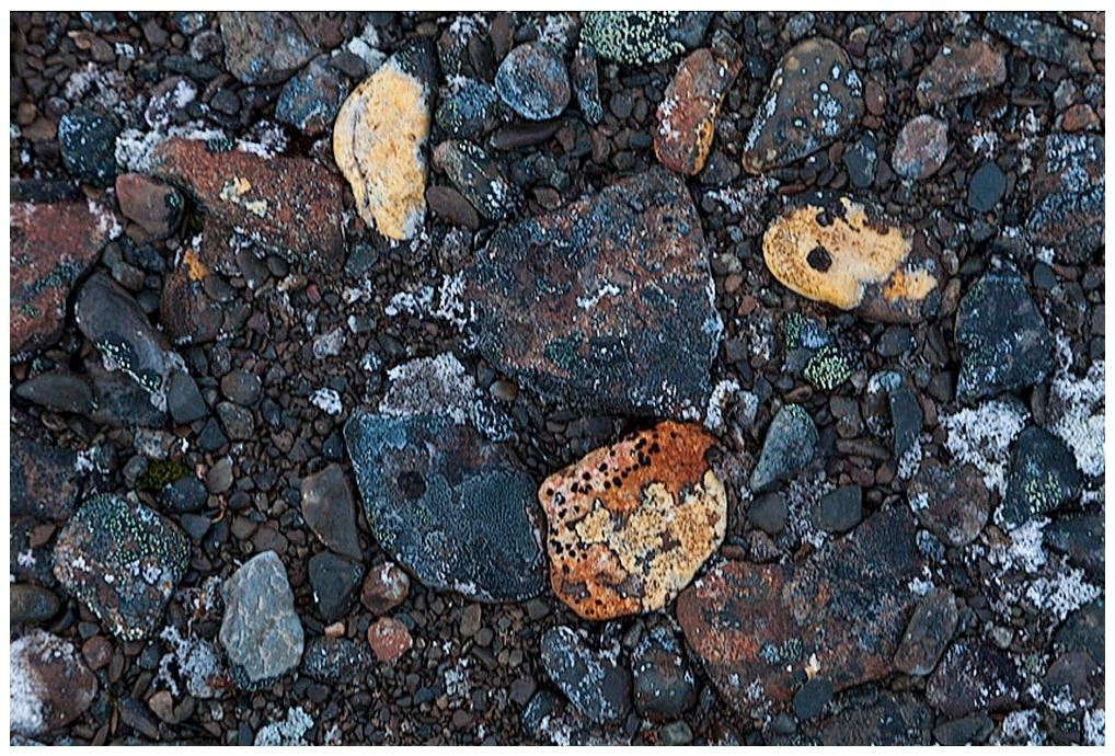 314-Spitzbergen-10