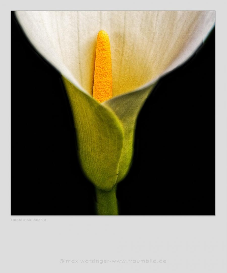 Blume-01