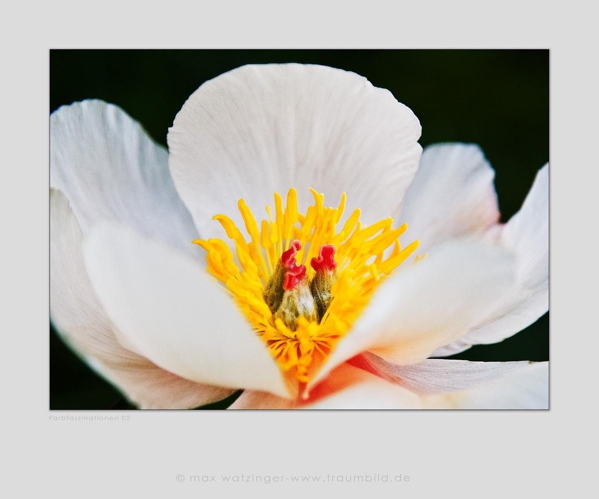 Blume-02