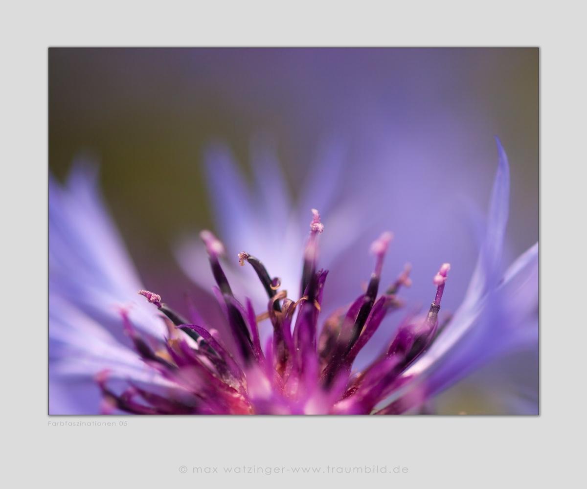 Blume-05