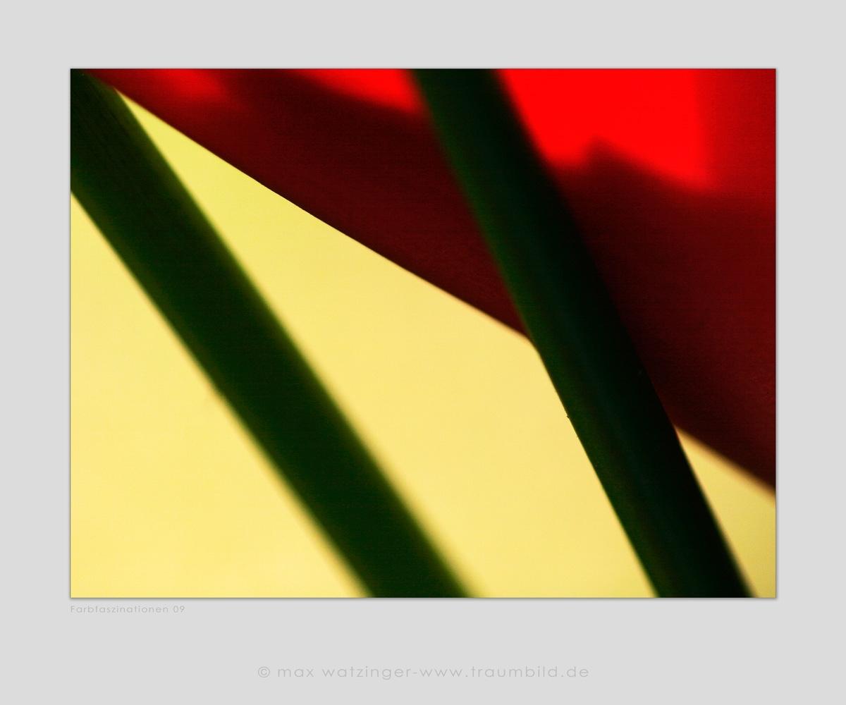 Blume-09