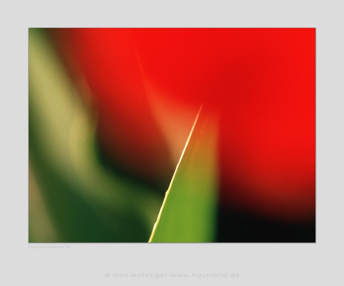 Blume-10
