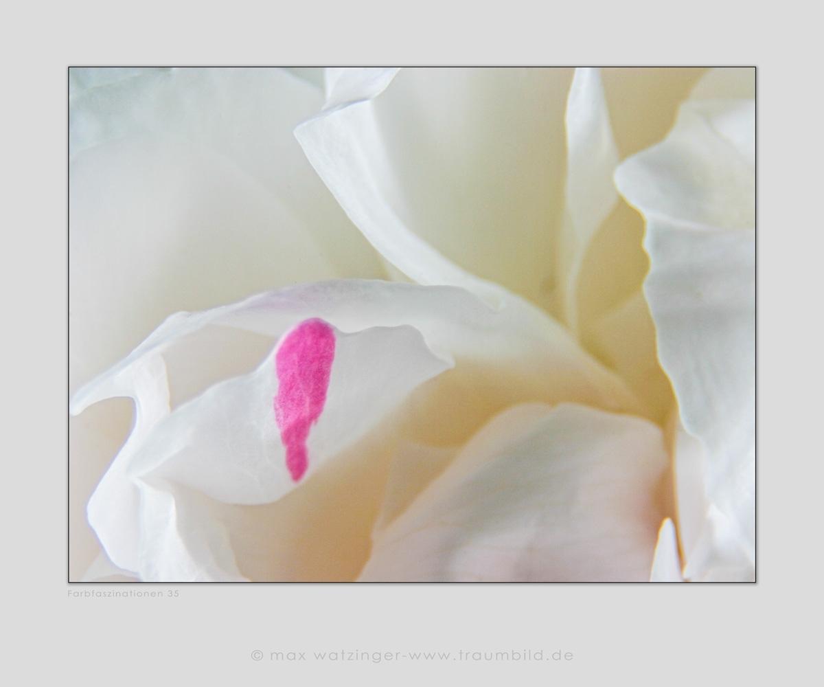 Blume-35