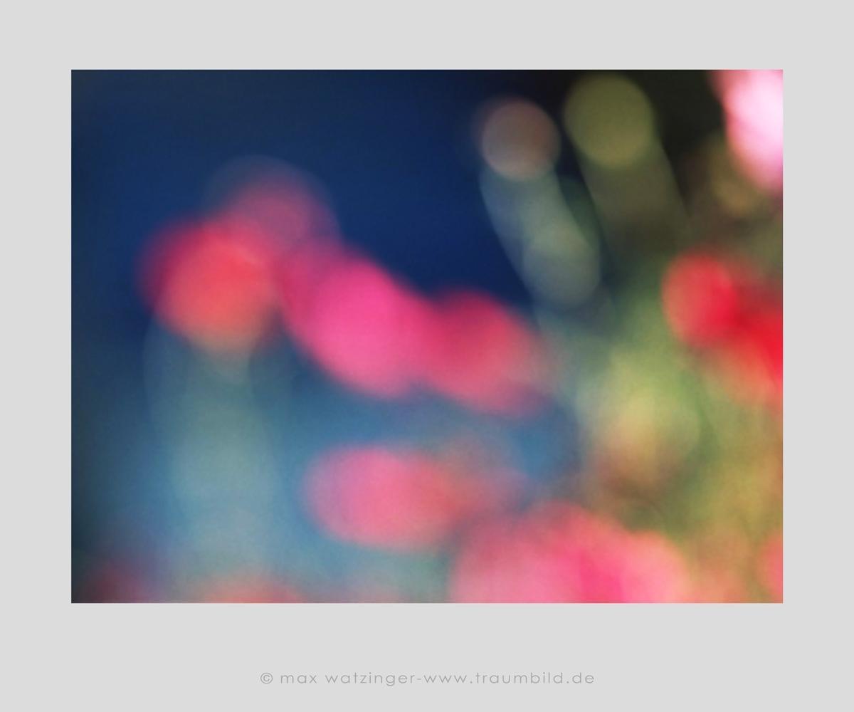 Blume-40