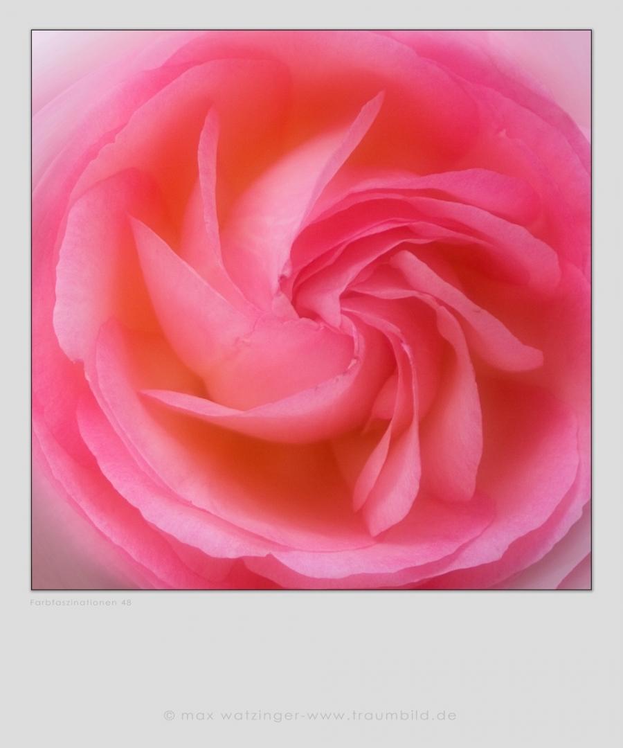 Blume-48