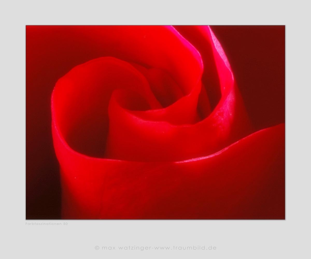 Blume-50