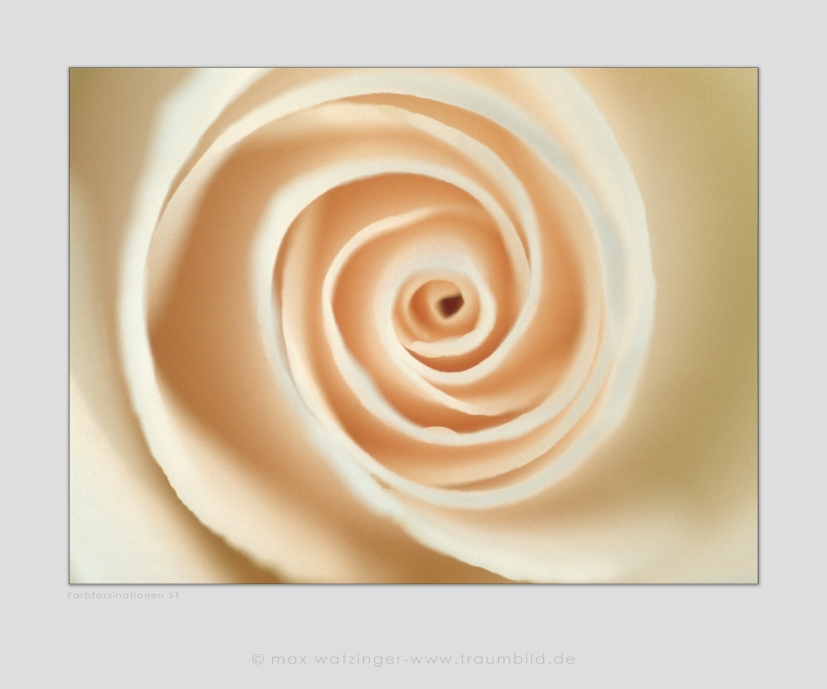 Blume-51