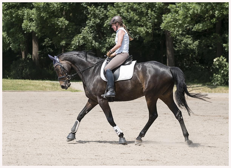 04-Pferd-040617