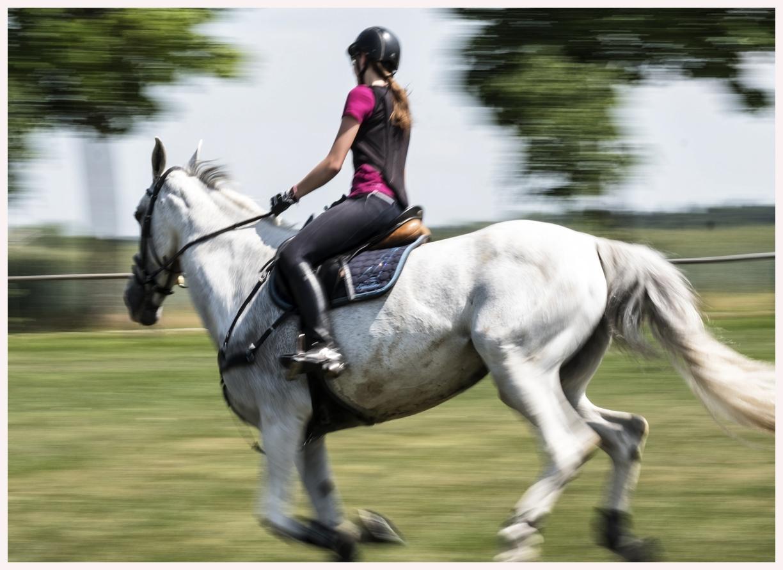 055-Pferd-040617