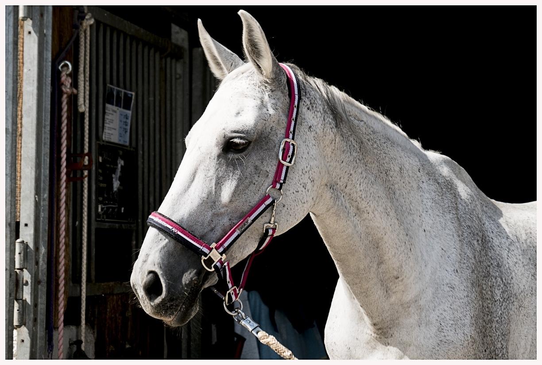 094-Pferd-040617