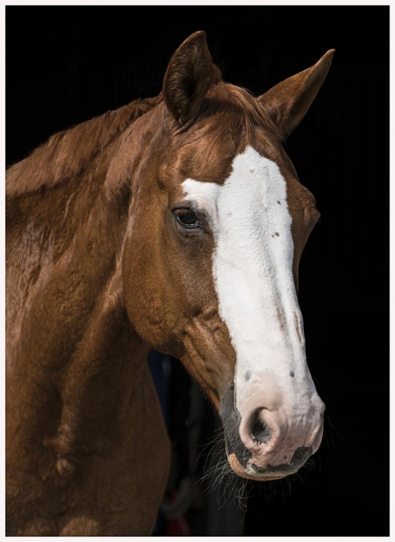 122-Pferd-040617