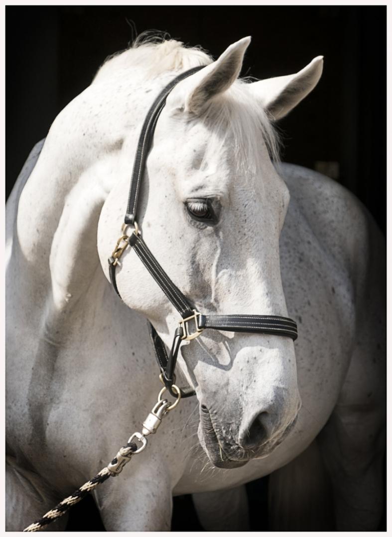 135-Pferd-040617