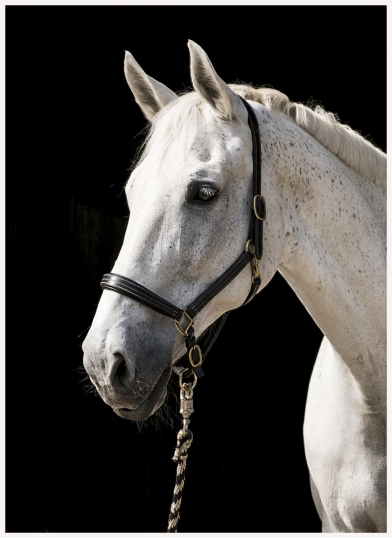 136-Pferd-040617