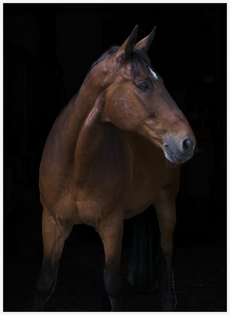150-Pferd-040617