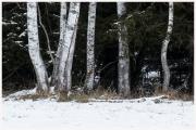 01-Winter-100218