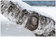 15-Winter-100218