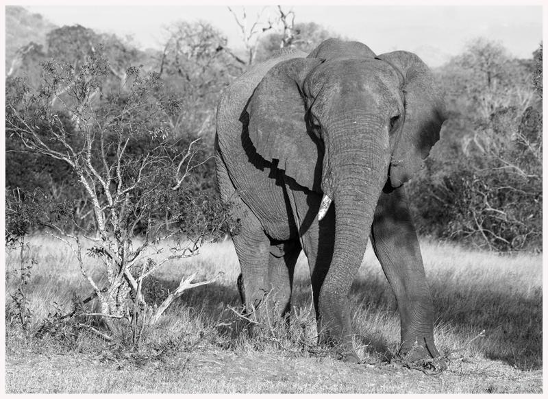 -Elefanten-18-10