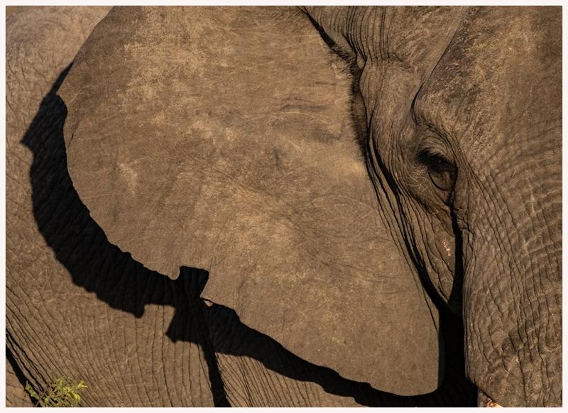 Elefanten-18-12
