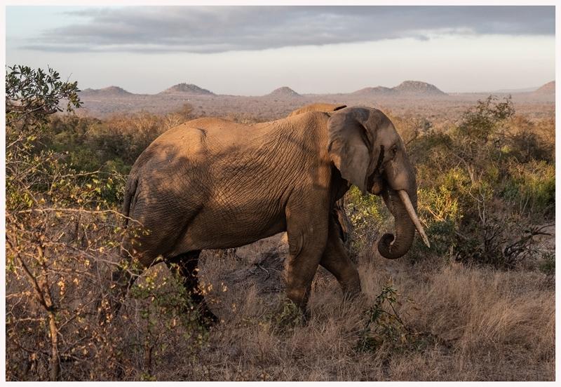 Elefanten-18-37