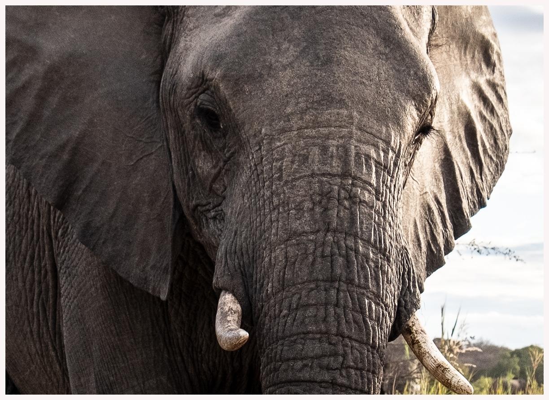 Elefanten-18-23