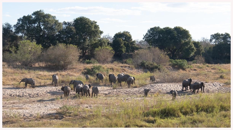 Elefanten-18-29