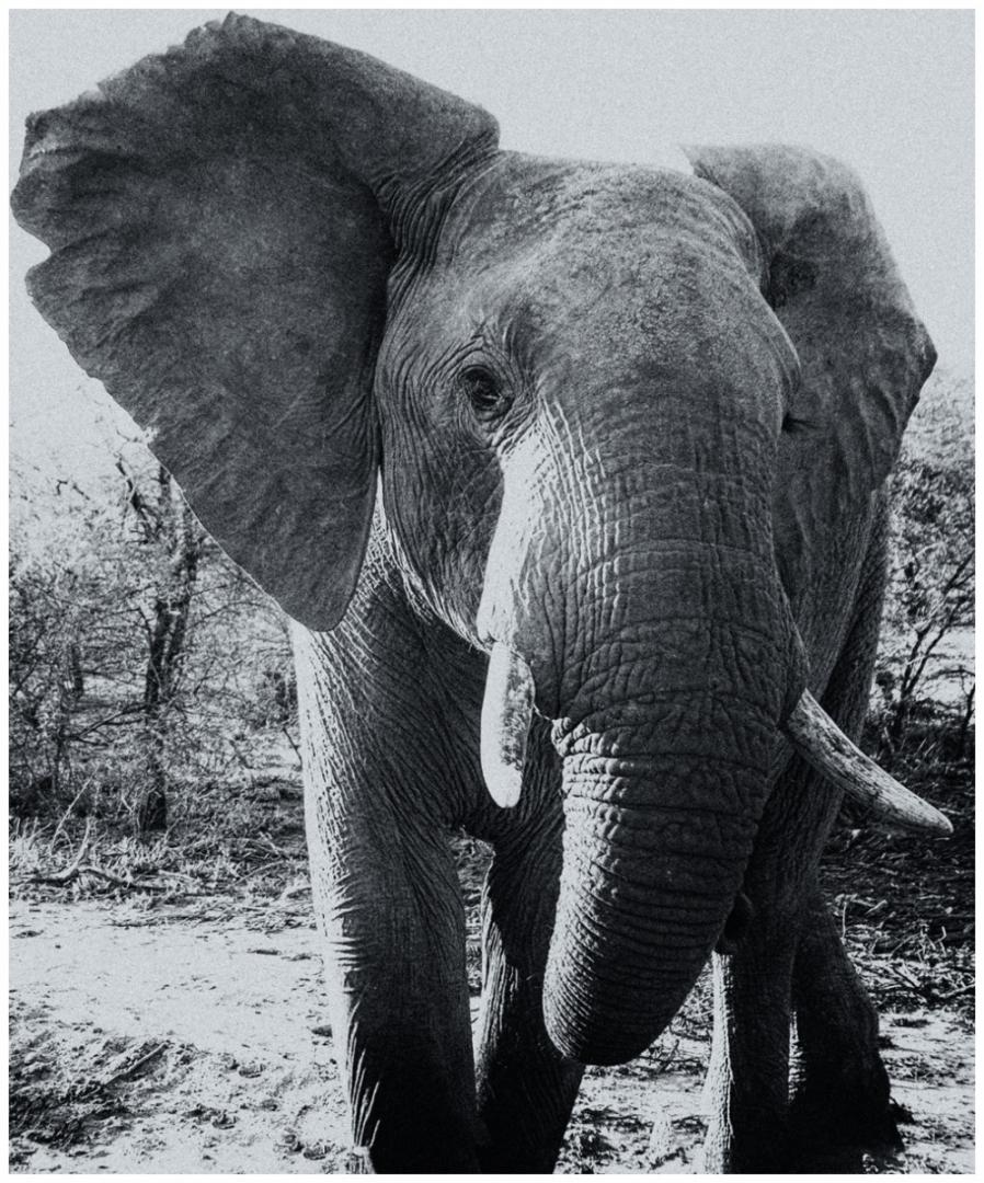 345-Afrika-16
